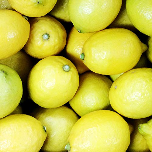 広島産 レモン 約10kg なかだい 農園直送 サイズいろいろ 皮まで食べられます 安心 広島ブランド 特別栽培農産物認定レモン国産レモン 呉市大崎下島 大長のレモン