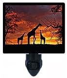Night Light, Giraffes at Sunset, Africa, Giraffe