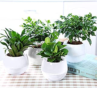 Dahey 5 Packs Self Watering Planter Pot for Indoor Plants, 4 Inch White Modern Decorative Plastic Flowers Pot for African Violets, Succulent, Herb and Orchid, Small