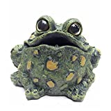Toad Hollow Croaking Toad Statue