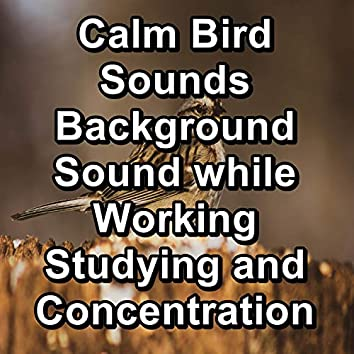 Calm Bird Sounds Background Sound while Working Studying and Concentration