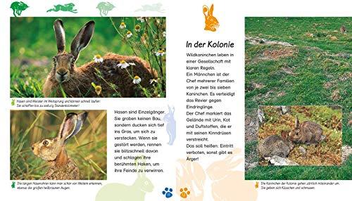 Das Kaninchen (Meine große Tierbibliothek) - 5