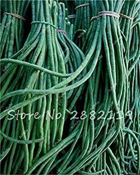 10 Pcs Multi Color long haricots Graines santé Graines de légumes biologiques, la croissance naturelle pour jardin délicieux Bon savoureux 8