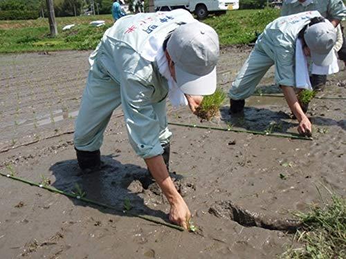 【精米】宮城県 登米市産 特別栽培米 白米 ひとめぼれ 5kg 令和2年産