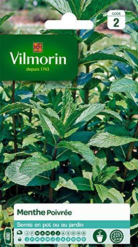 Vilmorin - Menthe poivrée - Plante médicinale et aromatique - idéal pour parfumer cocktails et salades - développement important