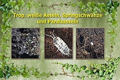 terra2go 3er Set - Trop. weiße Asseln, Springschwänze, Pandaasseln (große Art)