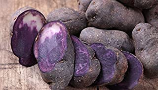 Simply Seed - Purple Majesry - Certified Organic Seed Potatoes - 2 LB- Ready for Fall Planting