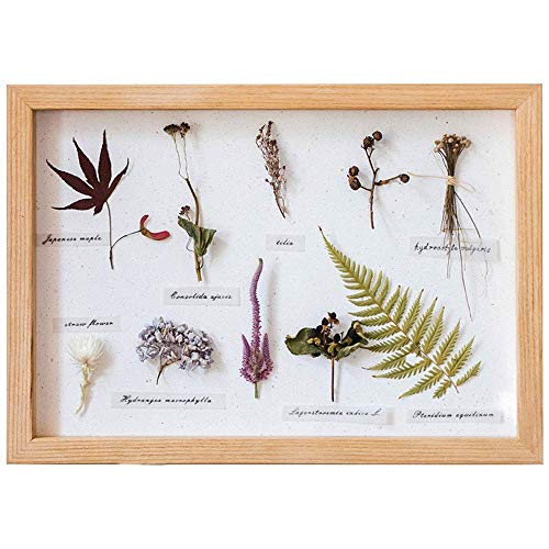 KFDQ Novel Wall Hangings,Solid Wood Deep Box Frame,3D Photo Frame - Glass Window- Interior,Table Top Display or Wall Hanging,for Specimen,Flowers,Art Crafts,Wedding Gifts,Etc,Shallow