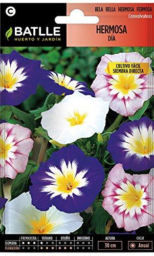 Semillas de Flores - Hermosa Día variada - Batlle