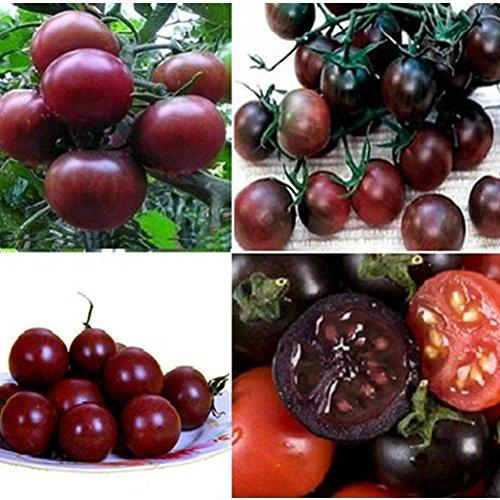 Pinkdose 20pcs Black Tomato Seeds, Tasty Nutritive Heath MiniatureTree Vegetables Fruit Planting Seeds, for Seasonal Garden Vegetable
