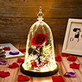 Tiaronics Beauty and The Beast Preserved Fresh Rose Flower Real Rose Gift Ideas for Valentine's Day, Anniversary, Christmas with Gift Box