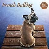 Magnet & Steel Französische Bulldogge 9708 Deluxe Kalender 2021