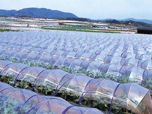 農ポリ 厚さ0.1mmX幅150cmX長さ100m