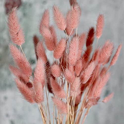 Eve's Bunny Tails Dried Flowers – 50 Stems- Natural DriedFlowers for Boho Vase – Hand Trimmed Faux Grass Decor – Ideal for Wedding party, Bouquet, Floral Arrangements, Home and Office Decor--Pale Pink