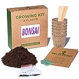 Weź to zasadź Kit de cultivo de plantas de bonsái, 3 especies de plantas: Lagerstremia india, pino negro, abeto espinoso, instrucciones de siembra, tierra, macetas de turba, regalo ecológico