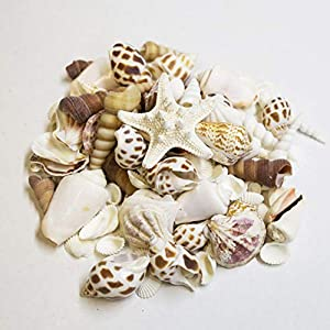 Medium Sized Shells in a Delightful Mix of Whites, Tans and Pinks | Perfect for Crafts, Beach Home Decor, Weddings, Vase Filler and Classrooms
