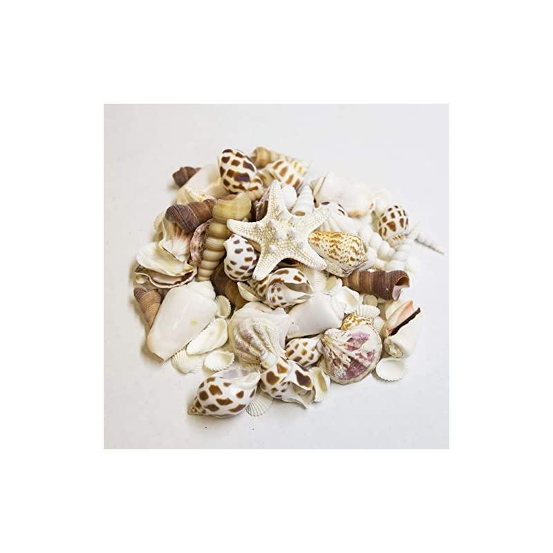 silk flower arrangements medium sized shells in a delightful mix of whites, tans and pinks | perfect for crafts, beach home decor, weddings, vase filler and classrooms