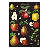 Cavallini Decorative Wrap Poster, Apple and Pears, 20 x 28