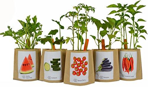 Kit de cultivo huerto urbano CALABAZA: Amazon.es: Jardín