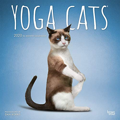 Yoga Cats 2020 12 x 12 Inch Monthly Square Wall Calendar, Animals Humor Cat (English, Spanish and French Edition)