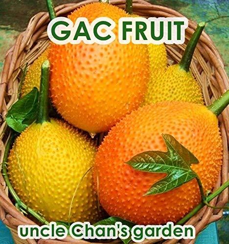 10 Samen: Uncle CHAN * GAC Fruit Seed MOMORDICA cochinchinensis vegatable Health benef C41