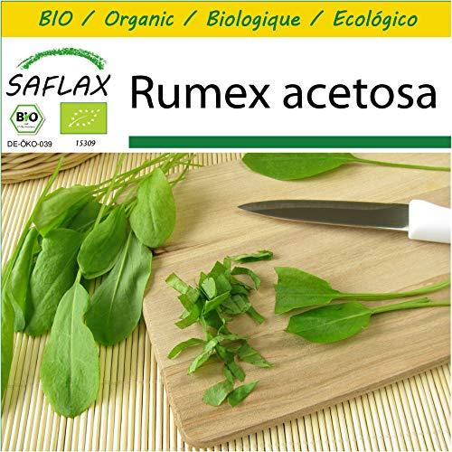 SAFLAX - Kit de culture - BIO - Oseille commune - 400 graines - Avec mini-serre, substrat de culture et 2 pots - Rumex acetosa