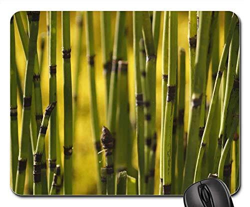 Mausemat Textur Grüne Pflanzen Feld Schachtelhalm Puzzlegrass Student Weihnachten Tastatur Mauspad Desktops Maus Matte Schlafsaal 25X30Cm Gummispiel Langlebiges Bürogeschenk Compu