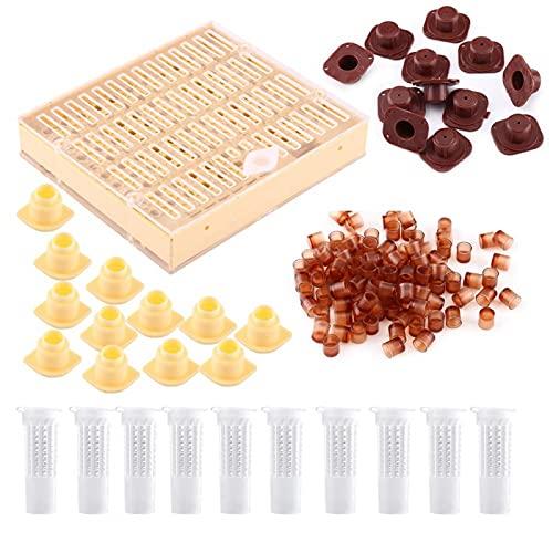 Copa da cela da rainha, apicultura, rainha da apicultura, copa da criação, caixa selbar tampa do bloco de cabelo gaiola de rolo equipamento apicultor