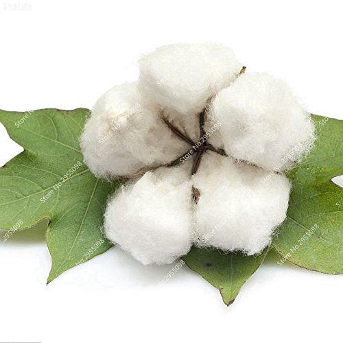35pcs / sac en coton graine rare cultures blanc Blooming Plante Bonsai Jardin Gossypium Planta pot pour jardin Décor Livraison gratuite