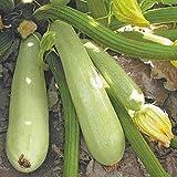 Potseed Squash - Zucchini Sangrum F1 Semi Ultra precoce varietà Ibrida, Non-OGM