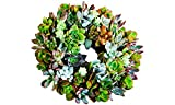 """Shop Succulents   8"""" Wreath Assortment of Hand Selected Succulents for Gifts, Home Décor, or P…"""