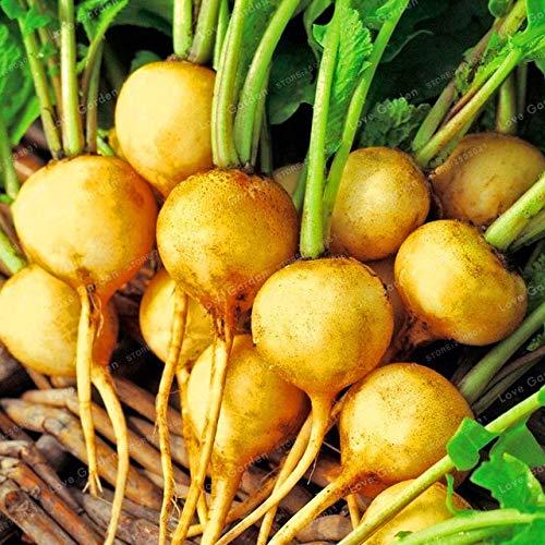 Shopvise Cherry Belle Radis Seeds 50 unités; couleur 9