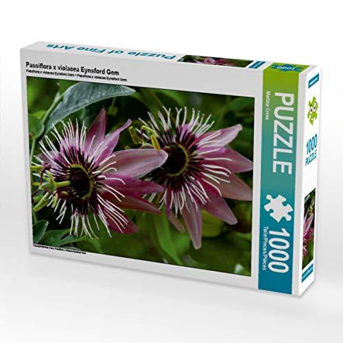 CALVENDO Puzzle Passiflora x violacea Eynsford Gem 1000 Teile Lege-Größe 64 x 48 cm Foto-Puzzle Bild von Martina Cross