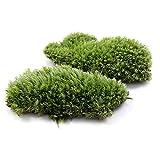 JXXDDQ 1 pieza verde artificial musgo falso coral piedra modelo hierba planta maceta, micro paisaje hada jardín acuario adorno (color: ver imágenes)