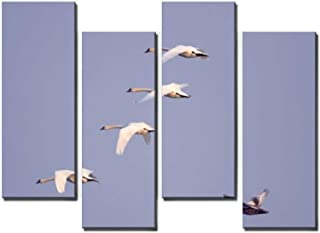4 Panel Group of Mute Swan birds in flight during the spring mating season in Canvas Print Pictures Modern Home Decor Post...