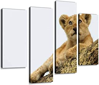 A young lion cub perches on a limb of an acacia tree, surveying its Canvas Print Artwork Wall Art Pictures Framed Digital ...
