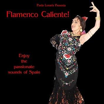 Flamenco Caliente!