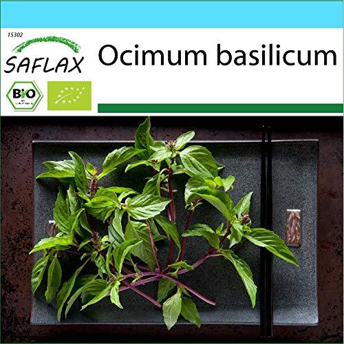 SAFLAX - Kit cadeau - BIO - Basilic - Thaï - 250 graines - Avec boîte cadeau/d'expédition, autocollant d'expédition, carte cadeau et substrat de culture - Ocimum basilicum