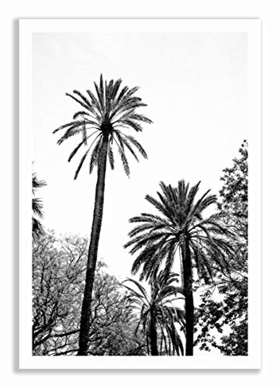 Palm Trees in Black and White, Black Satin Aluminium Frame, with Mount, Multicolored, 30x40
