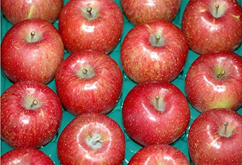 低農薬 サンふじ りんご 贈答用 4.5kg 小玉 18〜20個 お歳暮 ギフト