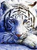 SunsOut White Tiger Face 1000 pc Jigsaw Puzzle