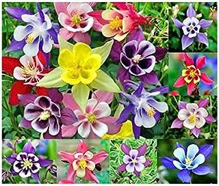 Best columbine flower bulbs Reviews
