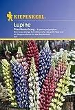 Lupinus polyphyllus Garten-Lupine mehrjährige Mischung