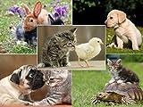 Set de postales de animales (Pack de 50),perfecto para personas a las que les gusta escribir un montón