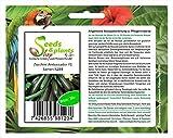 Pezzi - 10x Zucchina Ambassador F1 Verdure Seme Giardino Semi Sementi K284 - Seeds Plants Shop Samenbank Pfullingen Patrik Ipsa