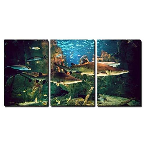 WJY 3 Stück Leinwand Wandkunst Zwei weiße Haie im Istanbul Aquarium Print auf Leinwand Ready to Hang 30cmx40cmx3 Kein Rahmen