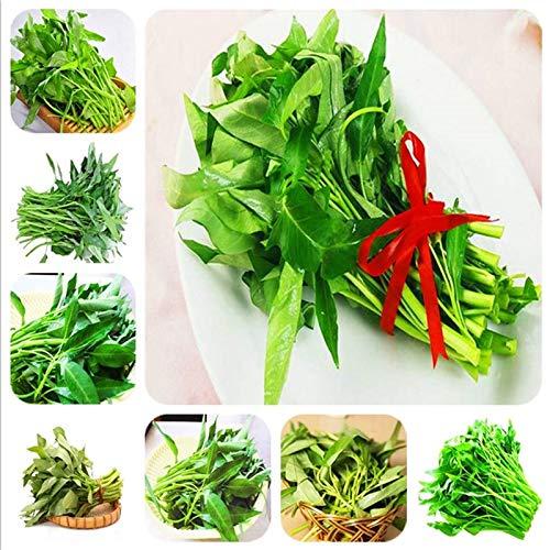 200pcs Wasserspinat Gemüse Bonsai, Chinesisch Spinat oder Kresse Förderung der begrenzten Zeit Spinat Bonsai organischen grünen essbaren: 200pcs-mix