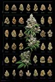 Buds Posters