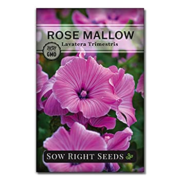 Best hibiscus seeds for planting Reviews