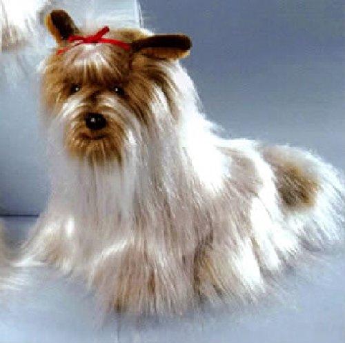 yorkshire terrier weiss